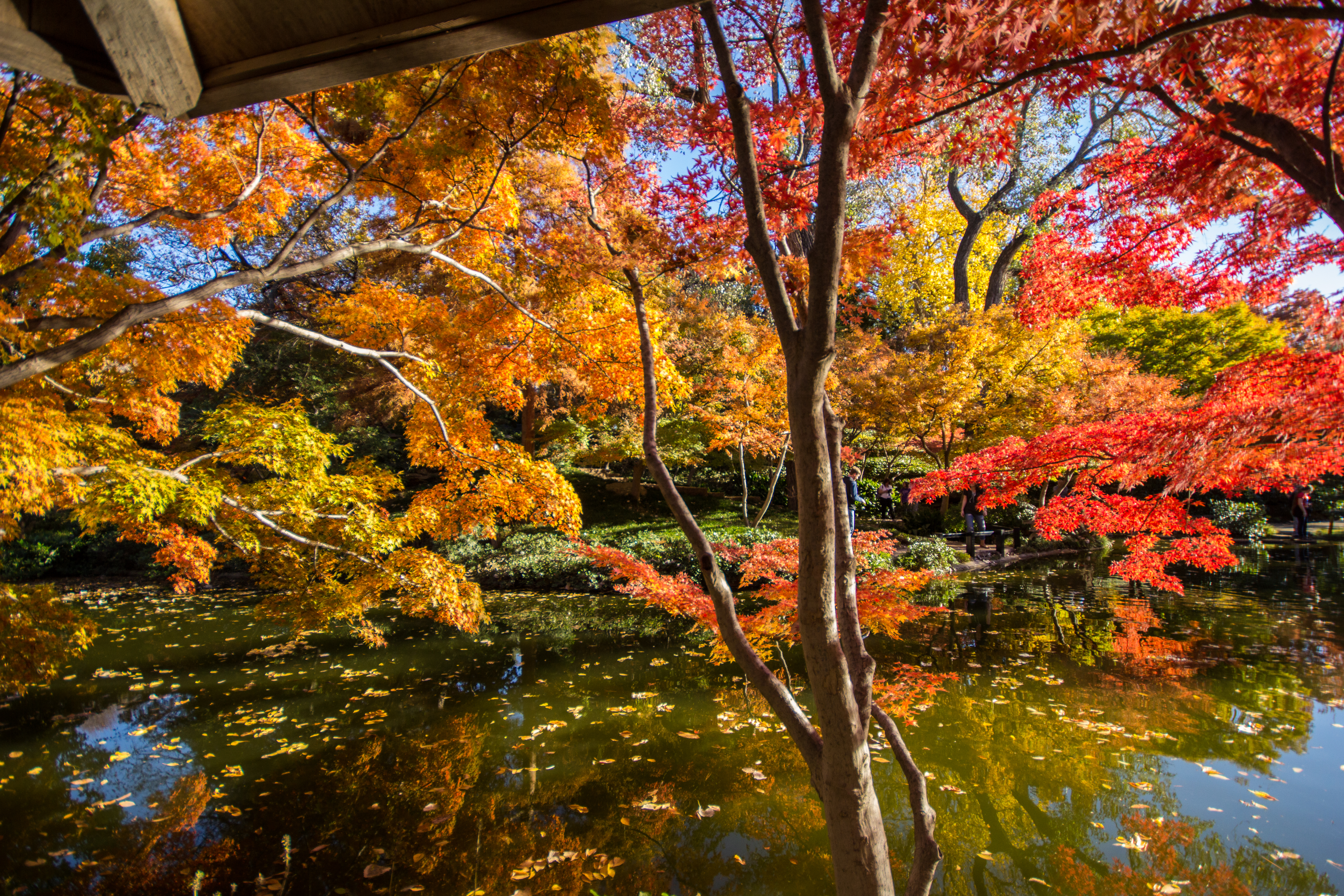 Fort Worth Botanical Gardens – Japanese Garden – The Wandering Gael