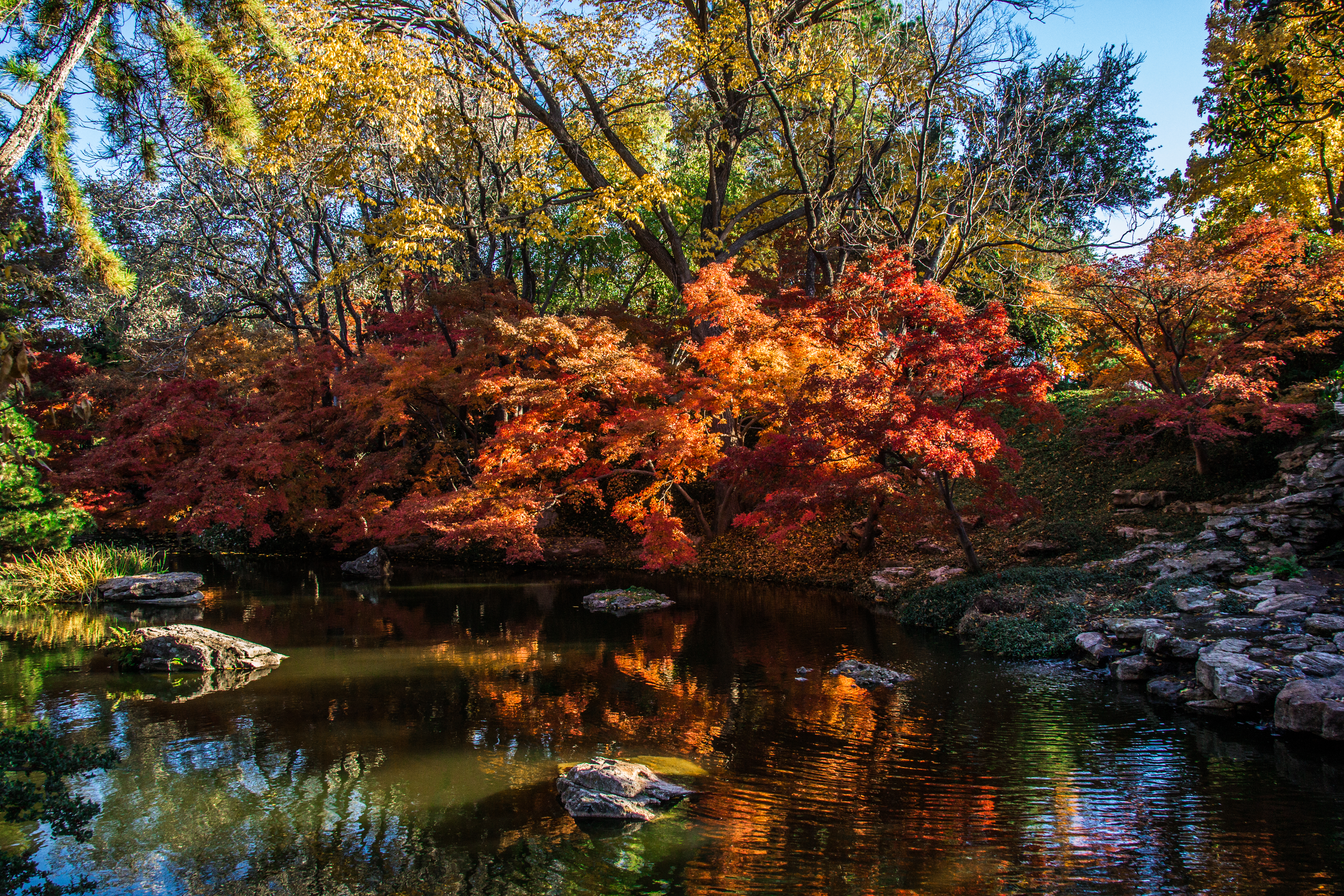 Fort Worth Botanical Gardens – Japanese Garden – The Wandering Gael
