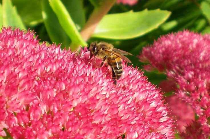 Cae Mabon Bee