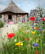 Wildflowers-Roundhouse-s-copy